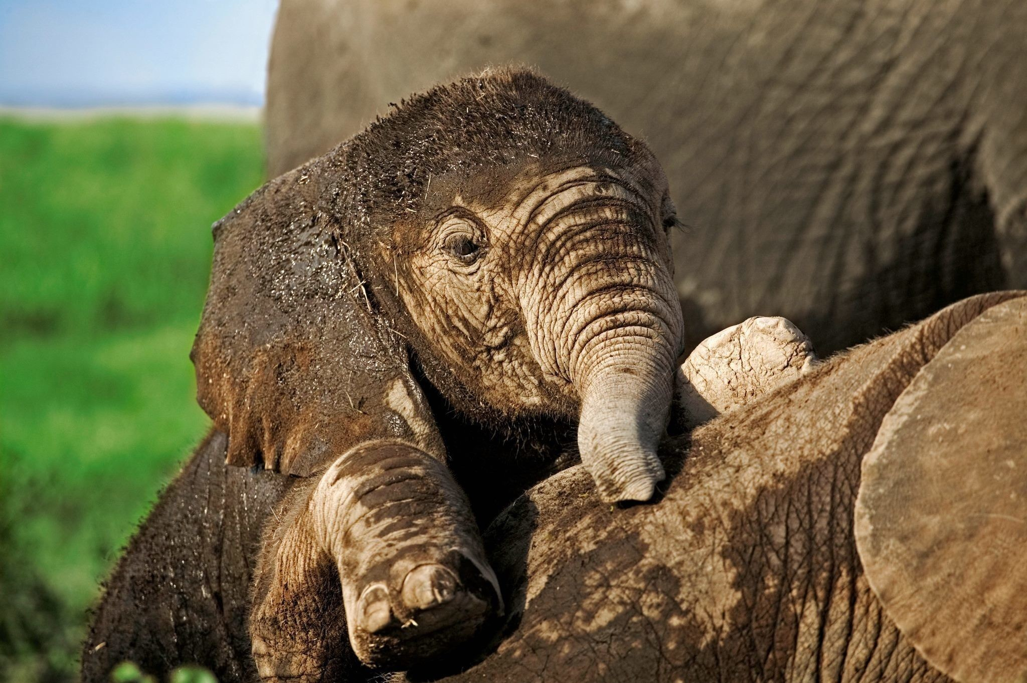 Res: 2048x1362, HD Elephants Wallpapers and Photos HD Animals Wallpapers ×