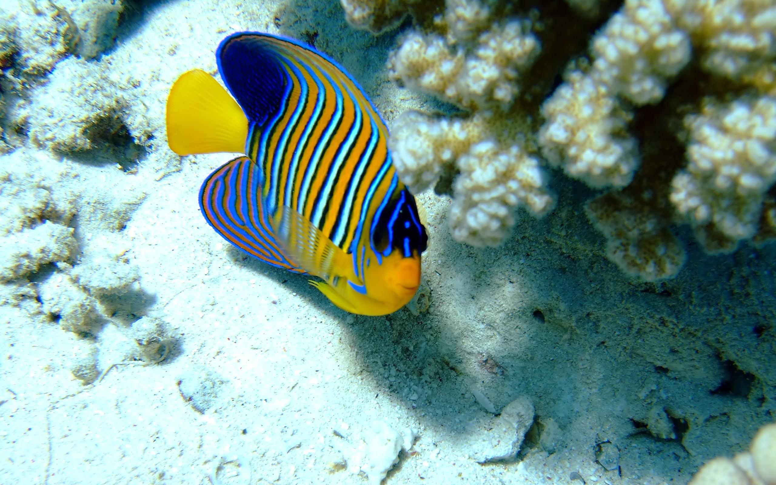 Res: 2560x1600, Best Photo: Sea Animal Wallpaper,  px