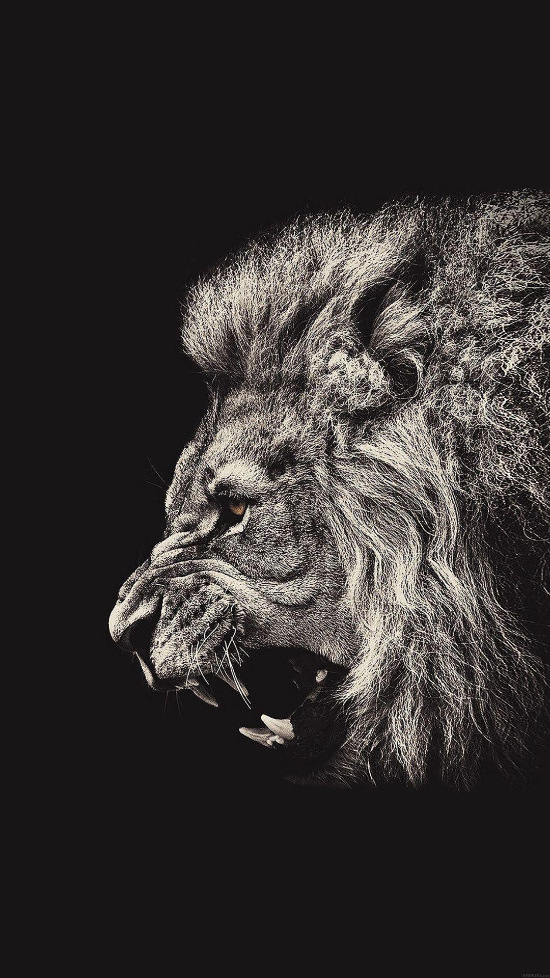Res: 1080x1920, Male Lion Portrait iPhone 6 Plus HD Wallpaper