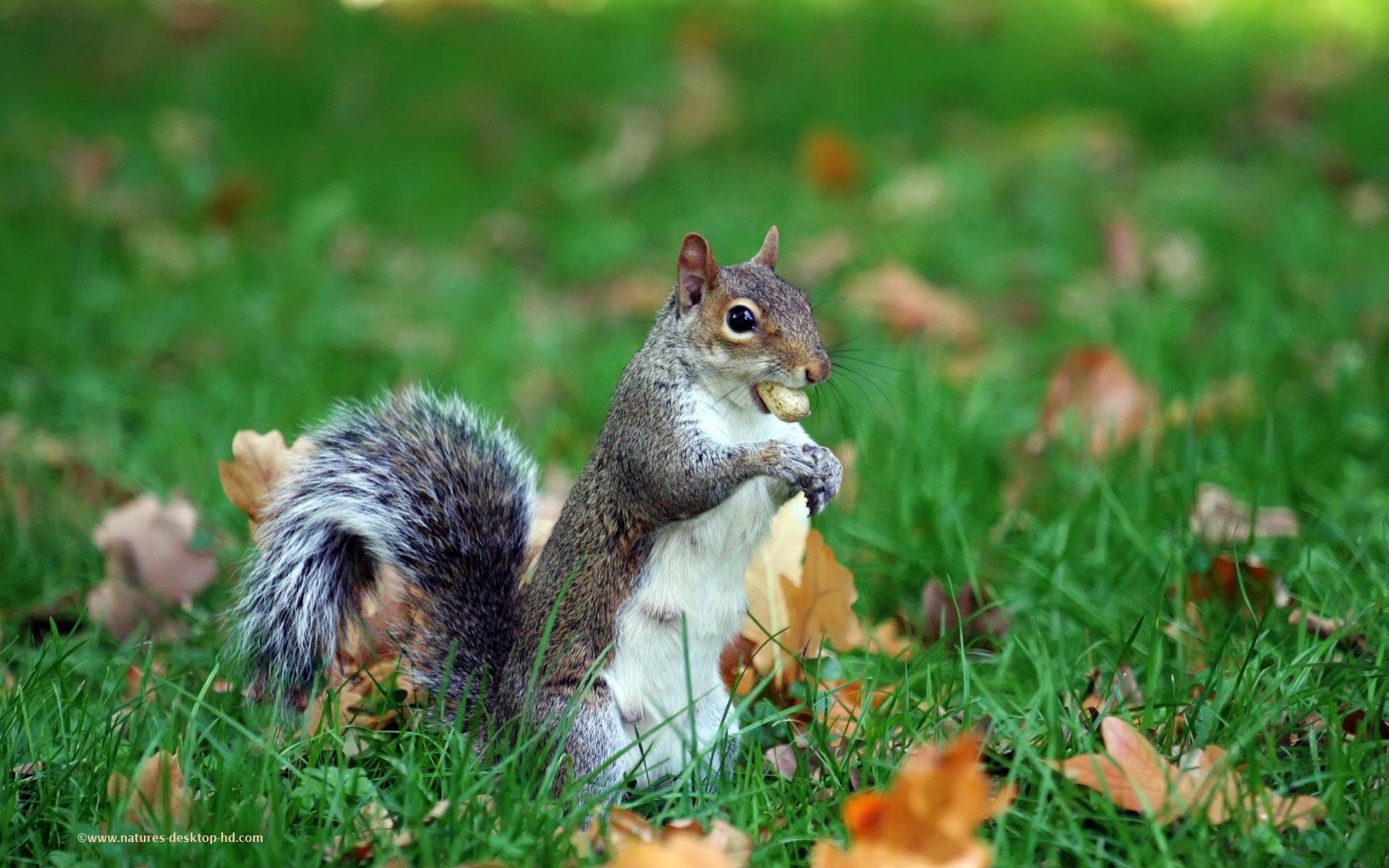 Res: 1920x1200, squirrel ...
