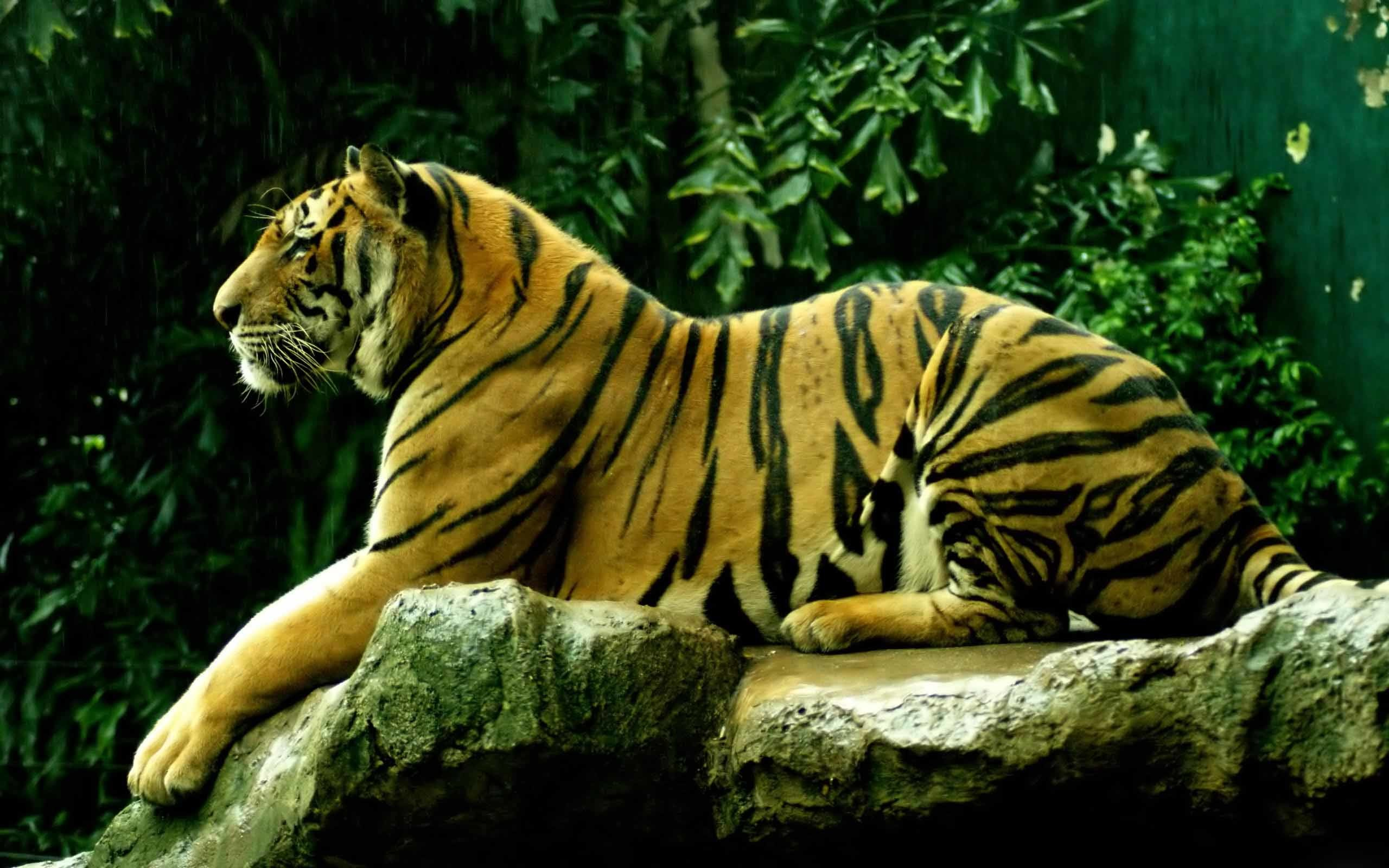 Res: 2560x1600, Impressive Moving Animal Wallpapers - Download for Free - ModaFinilsale