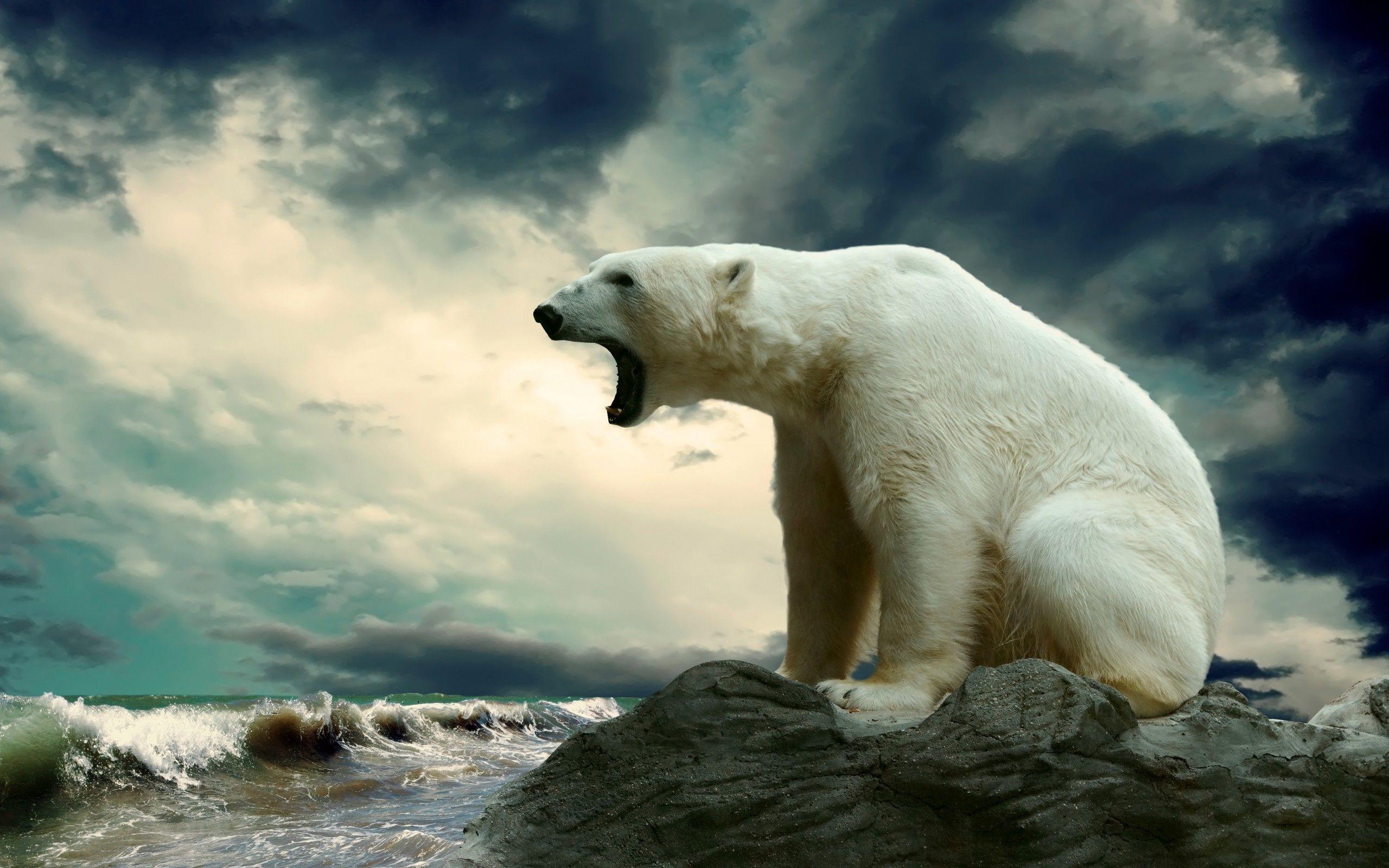 Res: 2560x1600, High Resolution Polar Bear Wallpaper HD Picture Widescreen