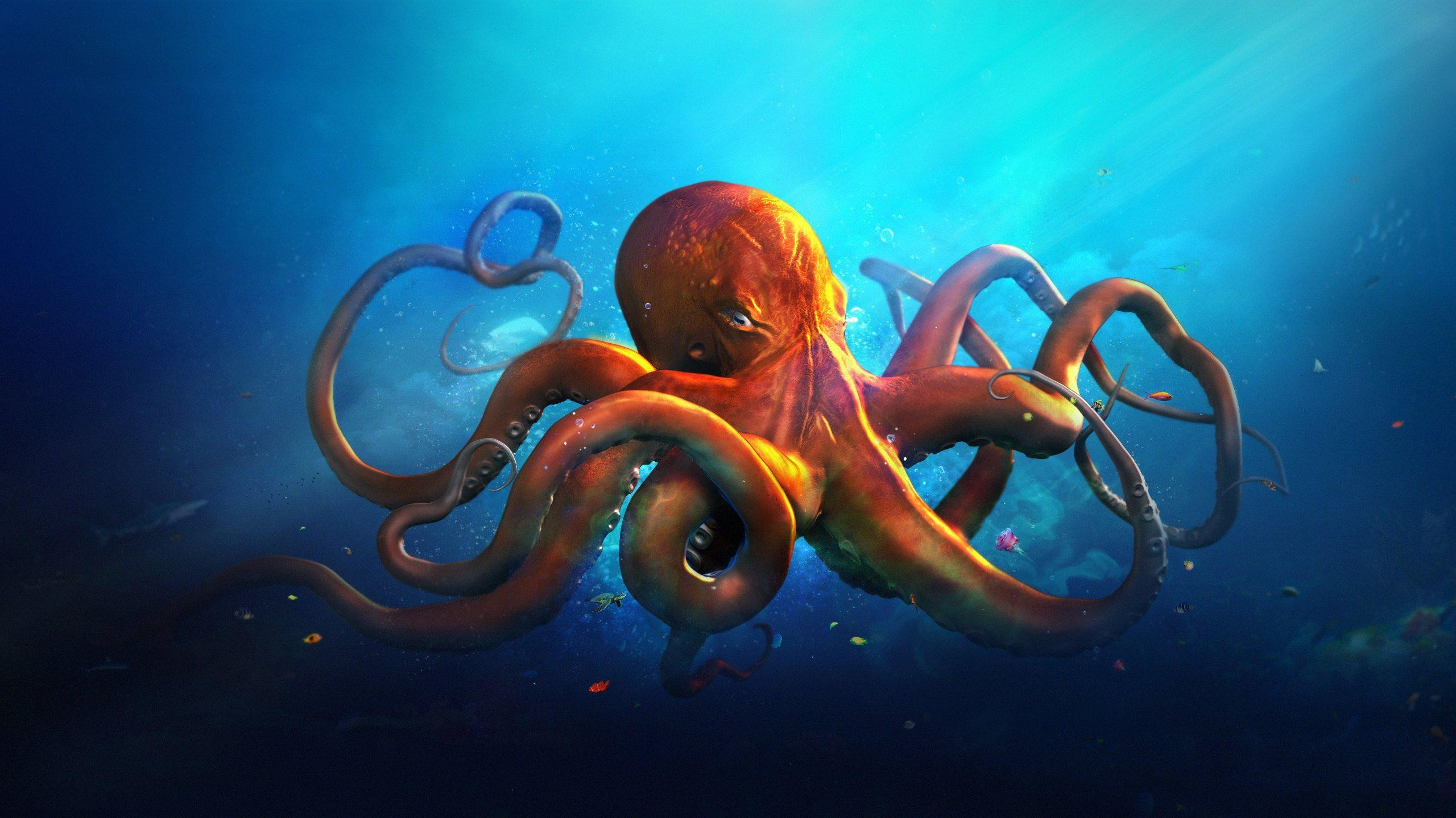 Res: 2560x1440, Big Octopus in Blue Sea Animals HD Wallpapers