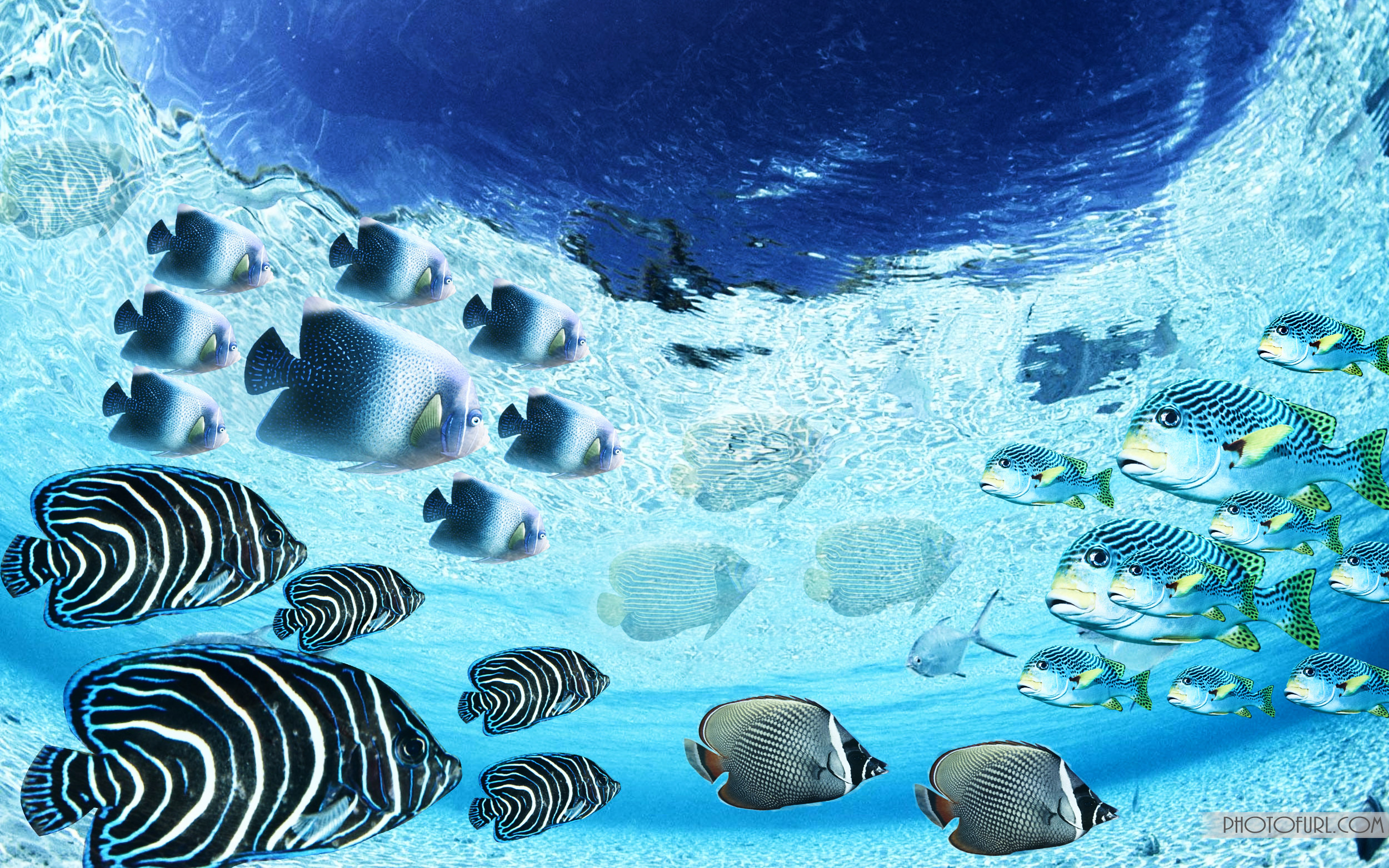 Res: 2500x1563, The Most Beautiful And Colorful Aquatic Sea Creatures Life Wallpaper For  Computer And Laptops Desktops