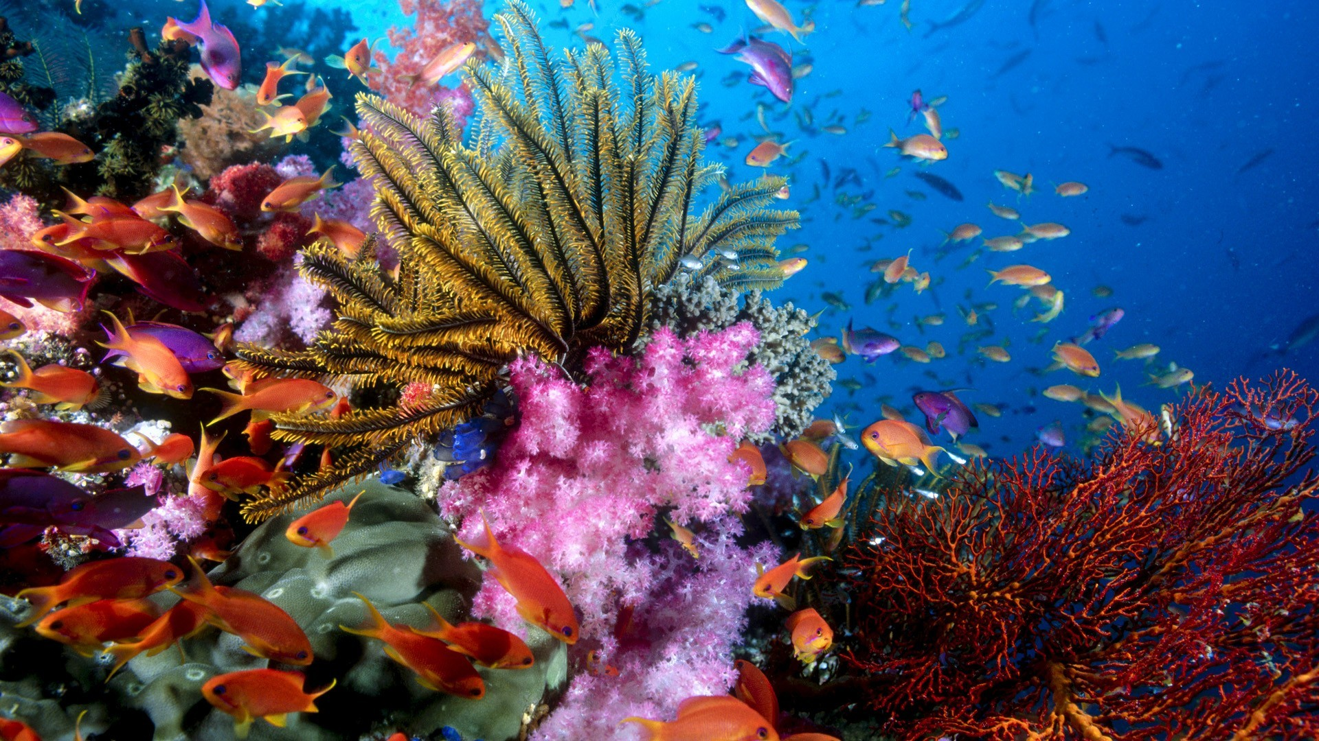 Res: 1920x1080, Colorful Sea Creatures HD Wallpaper