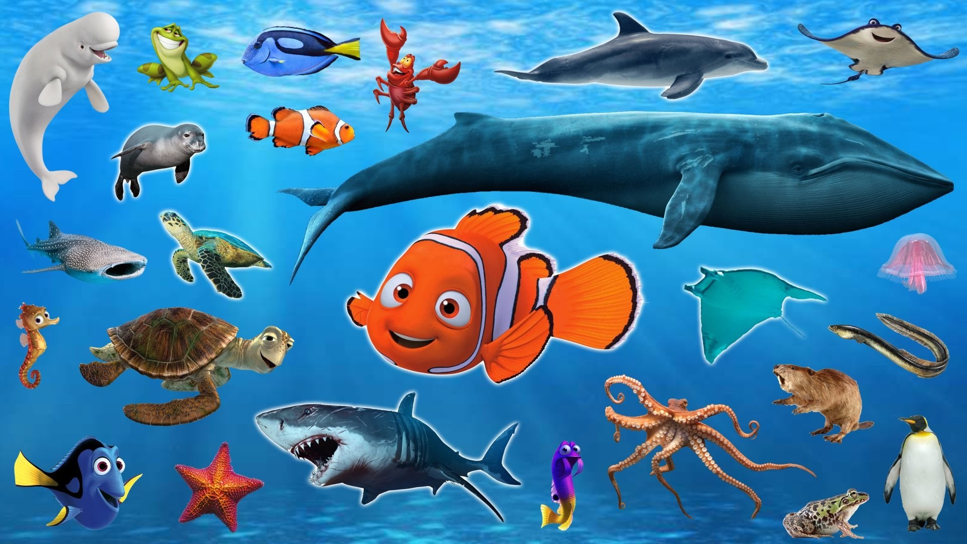 Res: 1920x1080, Unusual Sea Creatures For Kids Pictures Learn Animals Water Names And  Sounds DRuLii TV