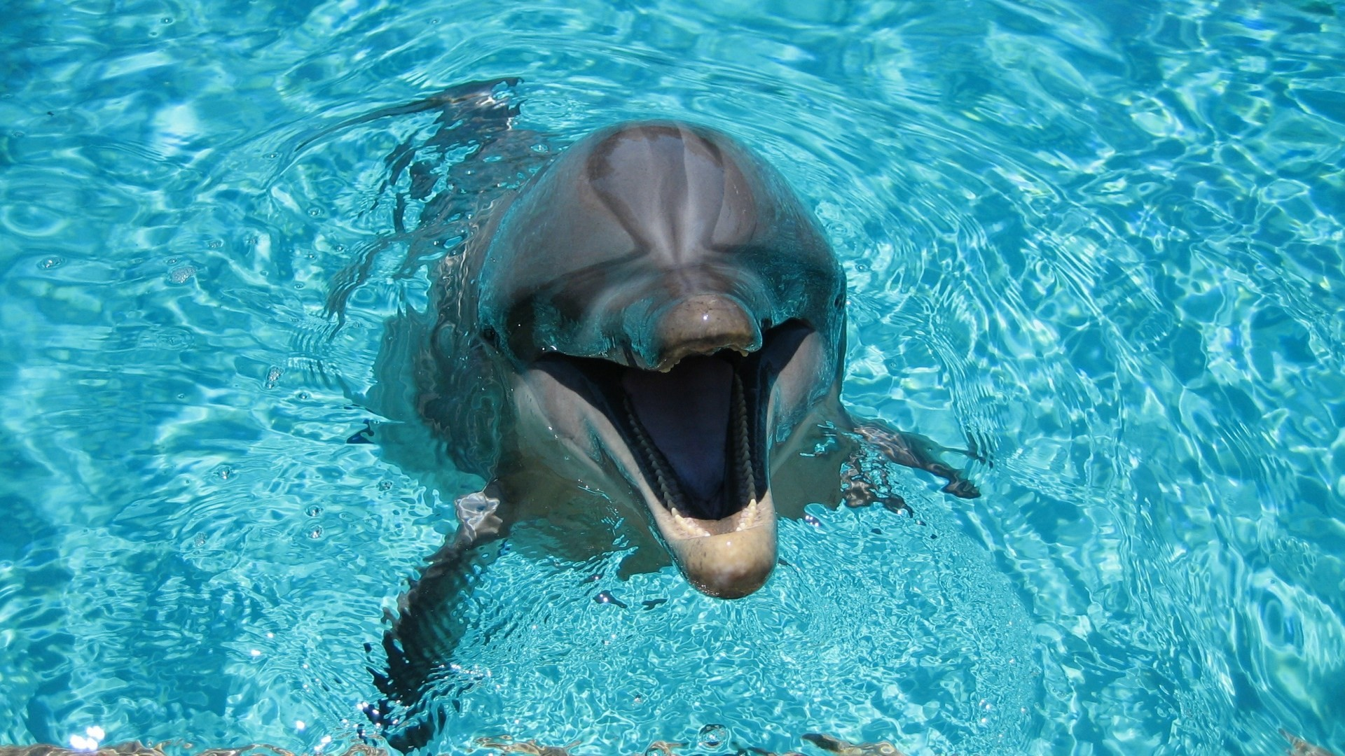 Res: 1920x1080, Download Dolphin Smiling and Playing In Water Wallpaper 1920×1080