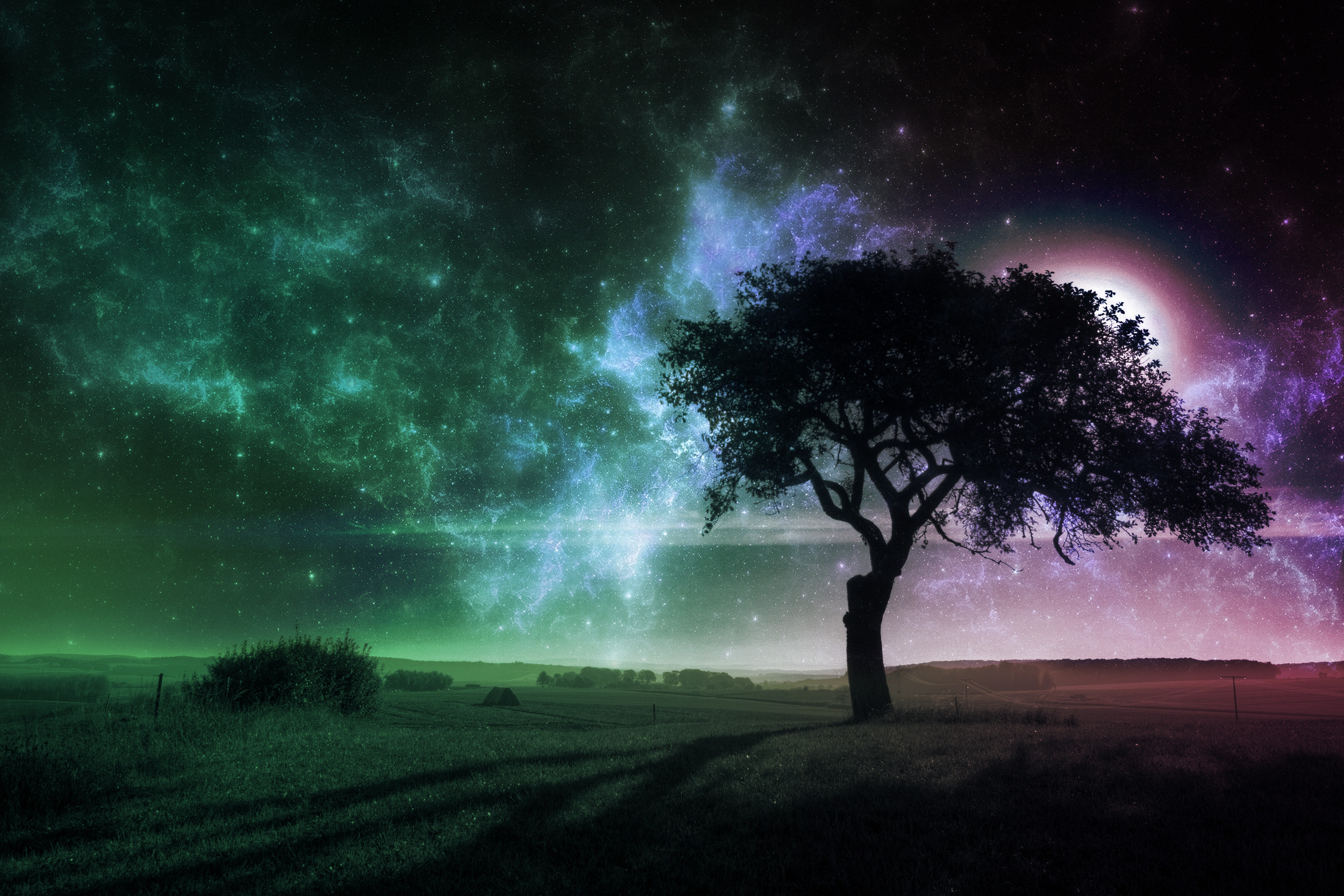 Res: 2500x1667, Tree at Night Full HD Wallpapers