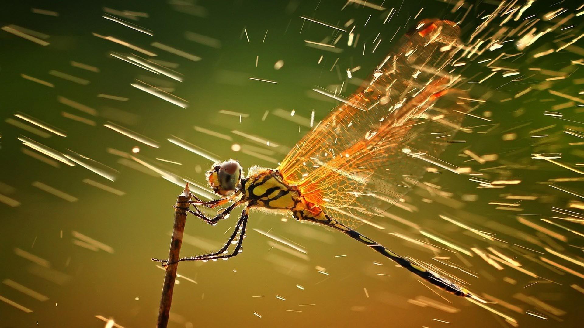 Res: 1920x1080, Dragonfly Amazing New Full Hd Desktop Wallpaper