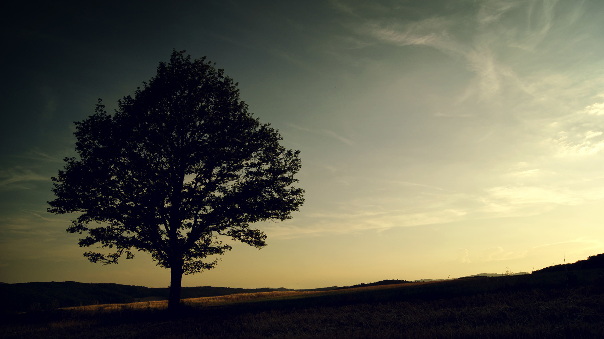Res: 1920x1080, greenery, desktop, wallpapers, amazing, background, alone, tree, blue, sky
