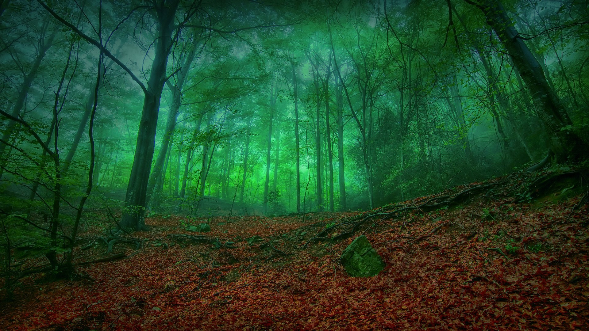 Res: 1920x1080, Mystical forest green