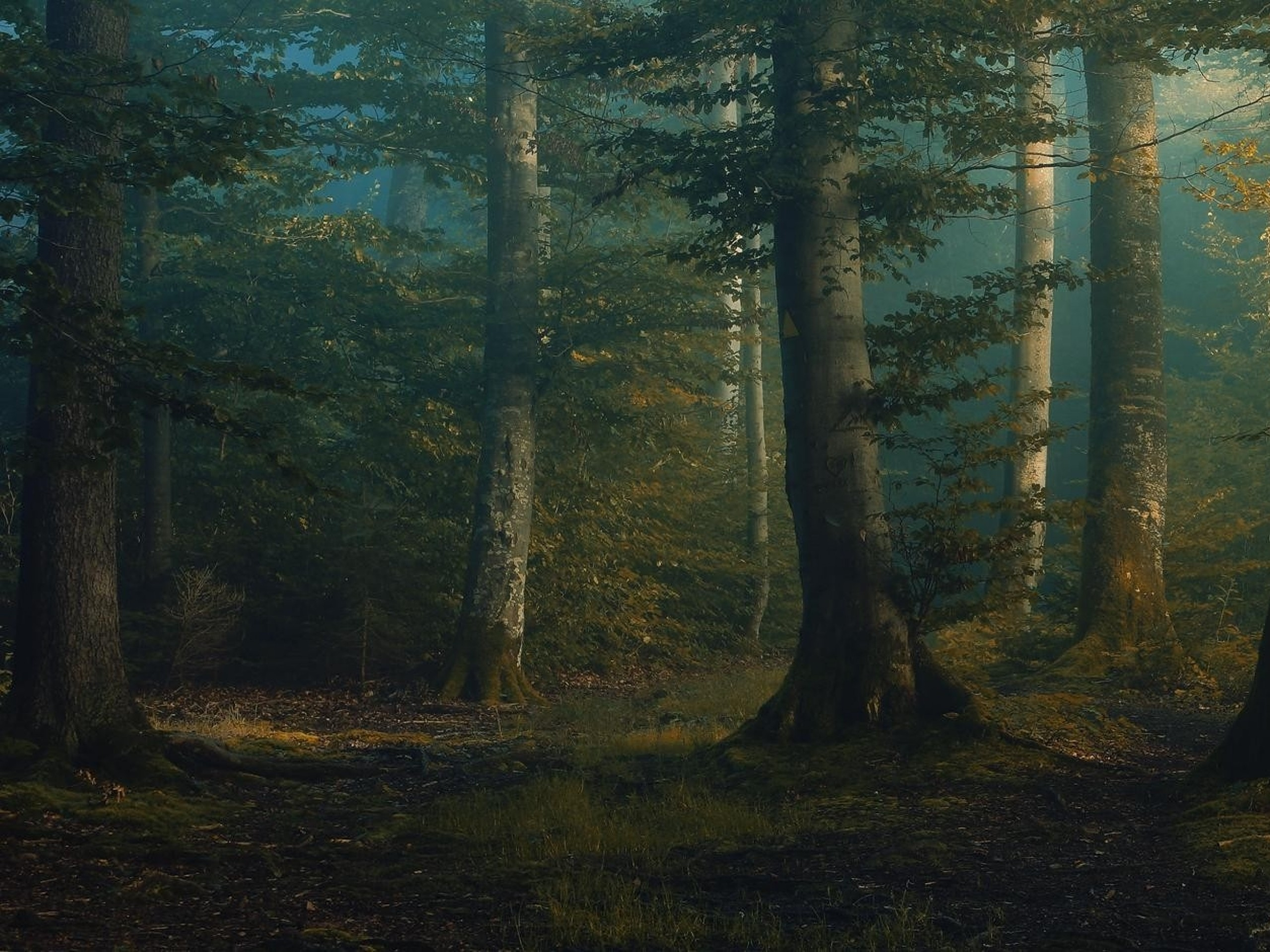 Res: 2560x1920, Image: Forest Mystical Dawning wallpapers and stock photos. Â«