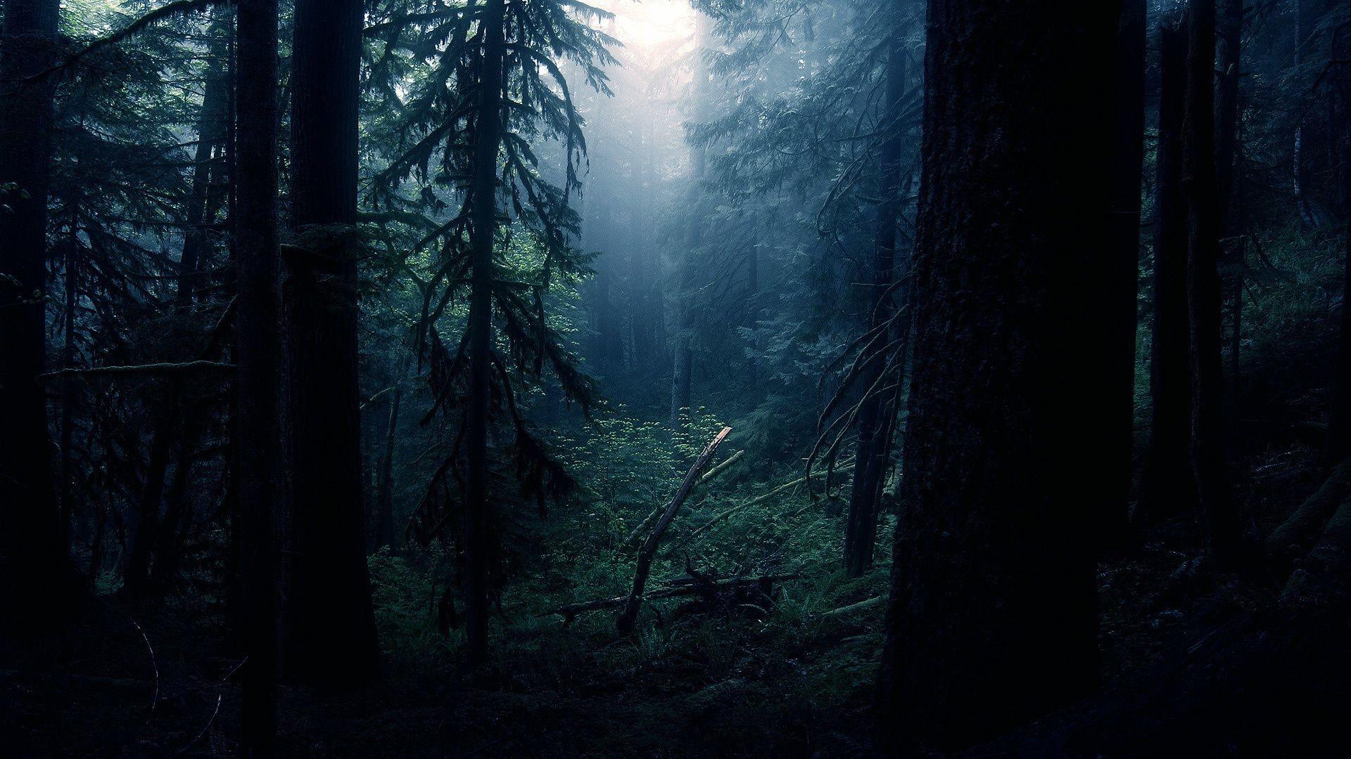Res: 1920x1080, Dark Forest | Dark Forest Wallpapers20 |HD Wallpapers Fan | Full HD  Wallpapers 1080p .