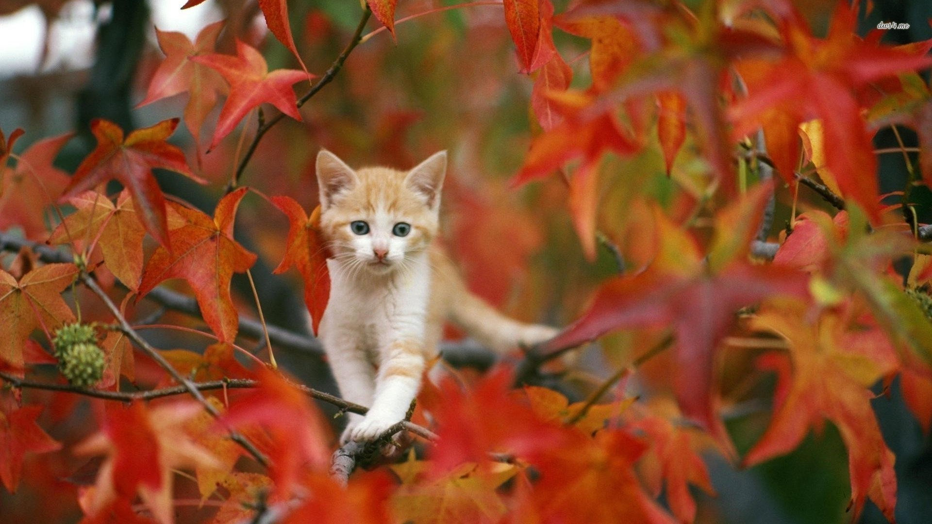 Res: 1920x1080, Fall with Animal HD Wallpaper For Mac