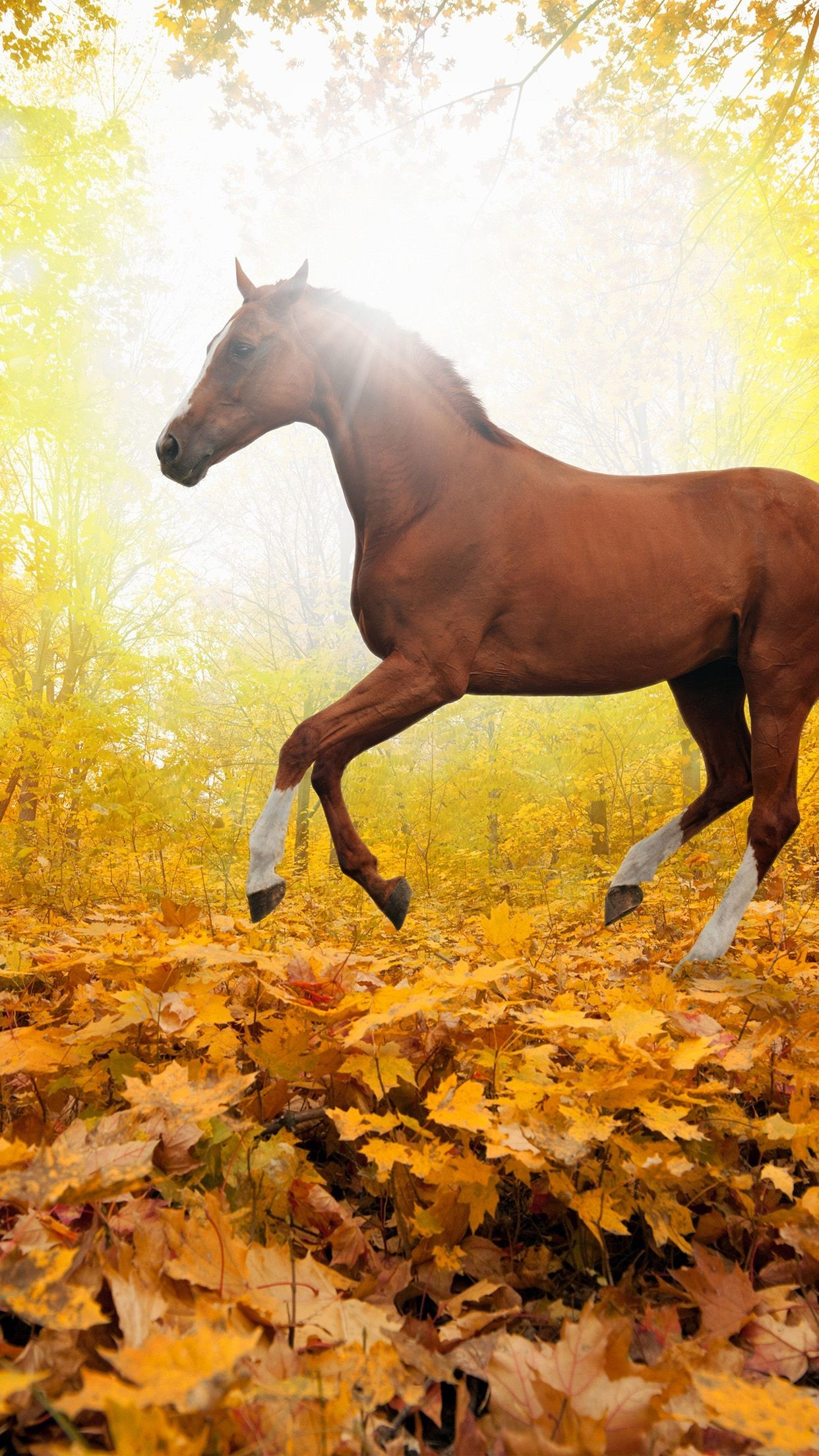 Res: 1242x2208, awesome horse-art-animal-fall-leaf-mountain-red-iphone6-plus-wallpaper