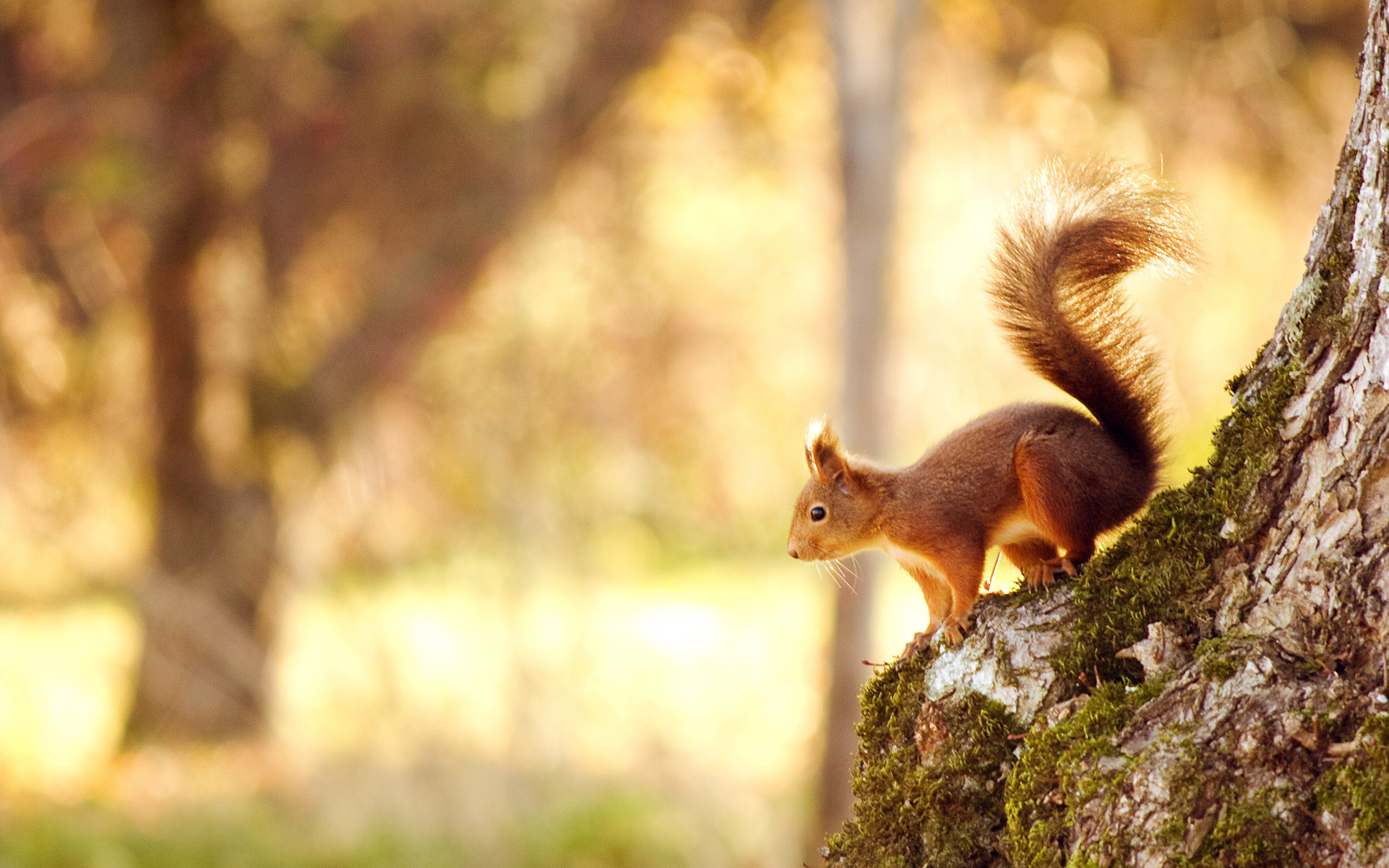 Res: 2880x1800, Animals images, Animals and Hd wallpaper on Pinterest