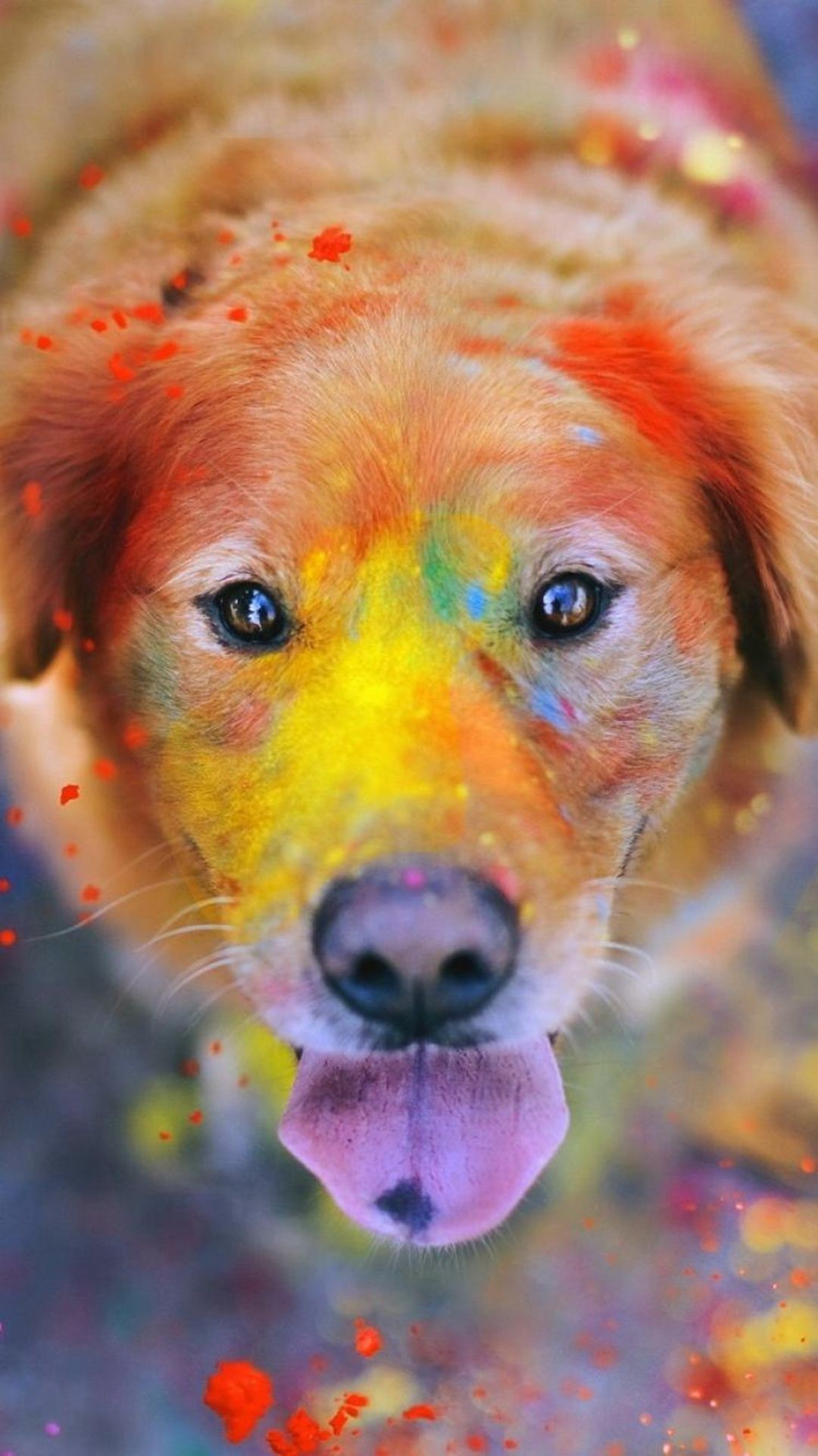 Res: 1080x1920, Colorful Paint Giant Dog Animal iPhone 6 wallpaper