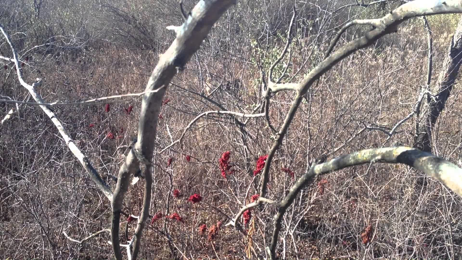 Res: 1920x1080, Deer Hunting with Mathews LX bow, with Easy Bow Cam mounted with iphone 4s  - YouTube