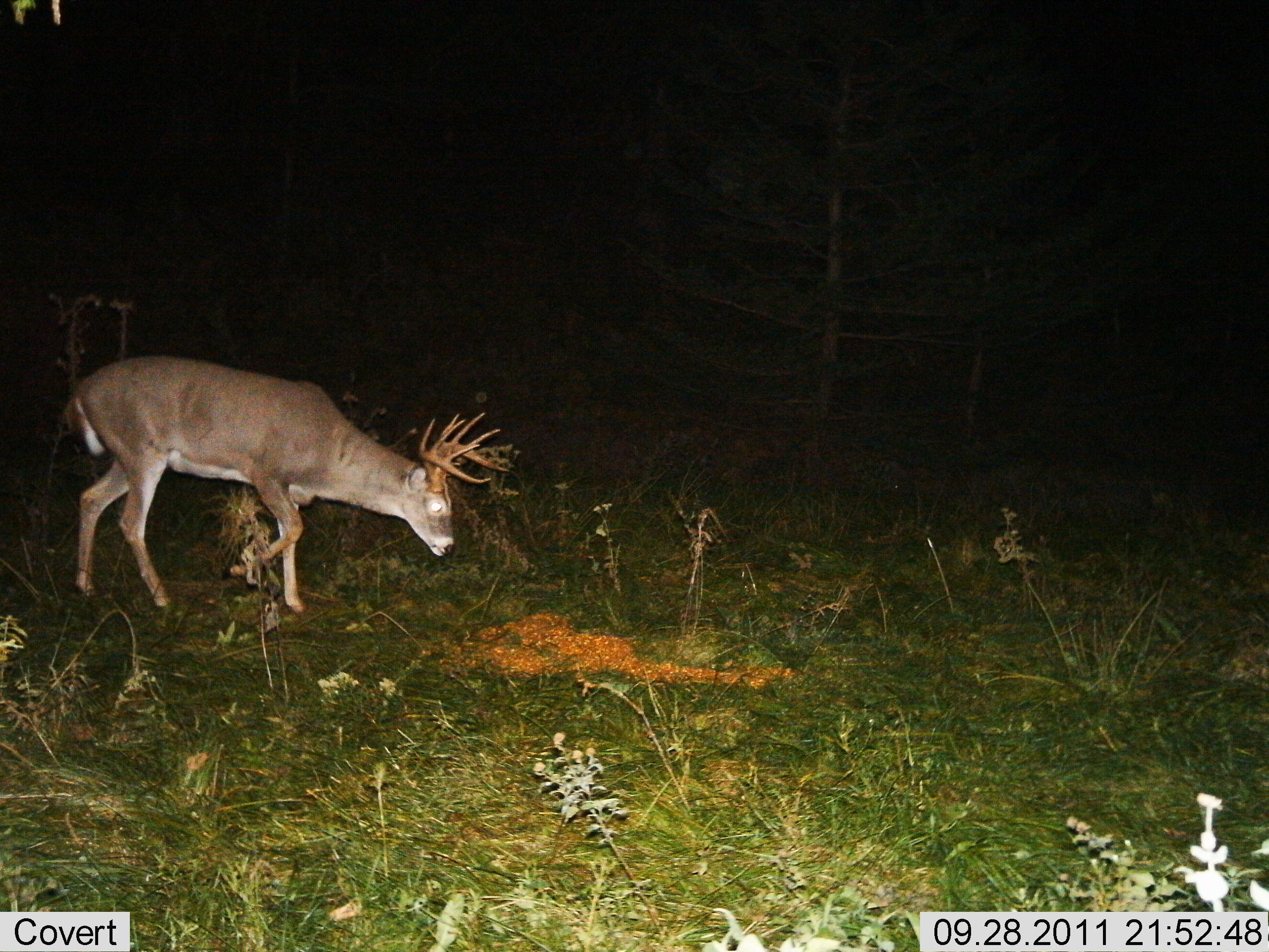 Res: 2560x1920, Brett Wallick NSAA State Indoor 300 trail cam 2 ...