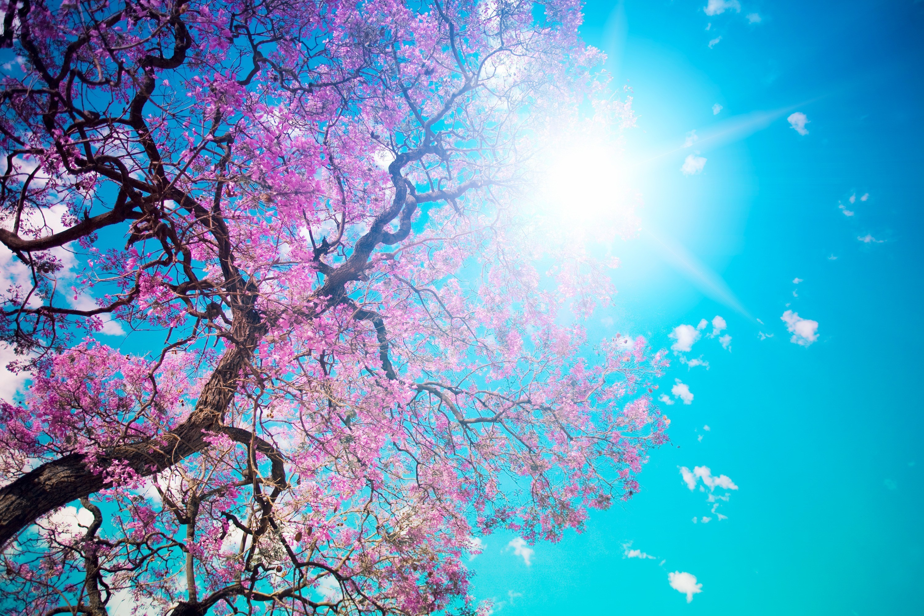 Res: 3000x2000, Blossom sun leaves pink trees wallpaper