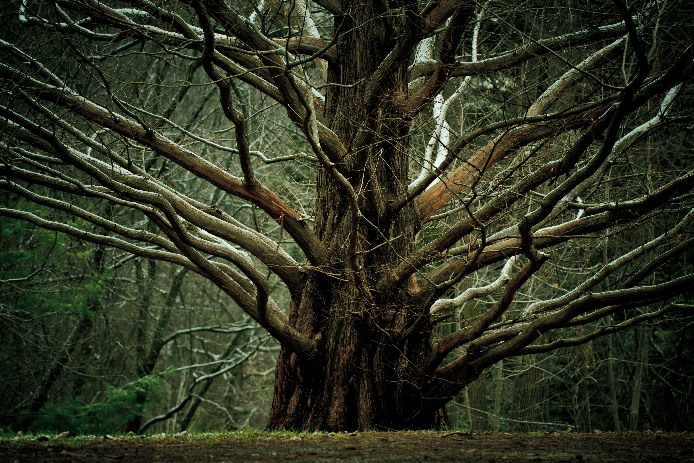 Res: 3000x2000, Chaos trees wallpaper