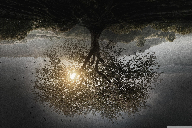 Res: 3000x2000, The Divergent Series Insurgent Tree HD Wide Wallpaper for 4K UHD Widescreen  desktop & smartphone